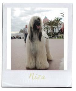 postcard-niza-logo