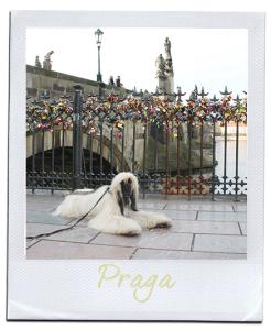 postcard-praga-logo