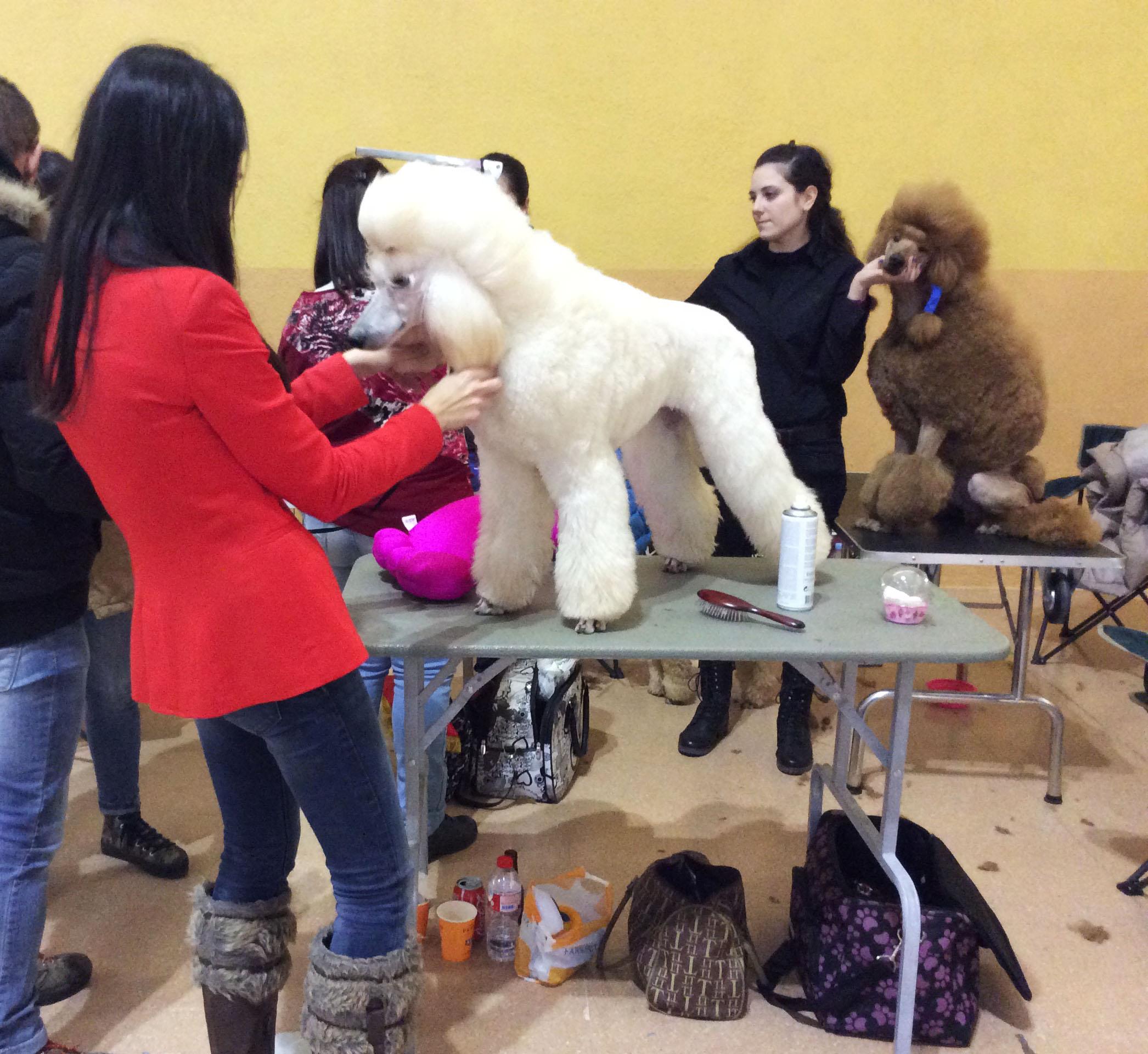 Concurso Canino Roda de Barà