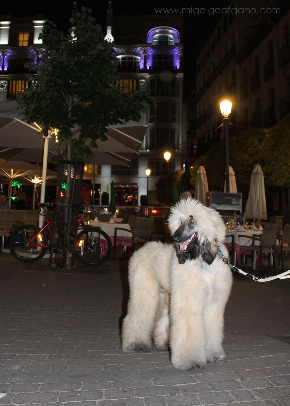 hotel madrid mascota: