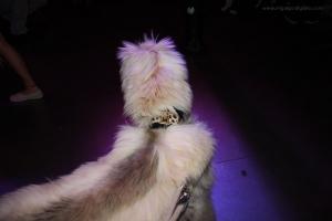 """Djoko con su collar """"solidario"""", hand made by Barcelona Dogs"""