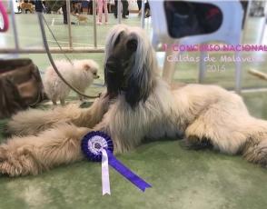 caldas-malavella-1er-concurso-nacional-canino