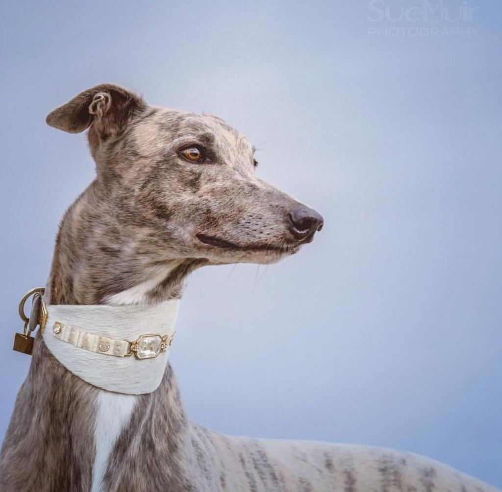 Garbo-dog-collar-sighthound