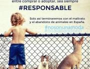 #nosonunamoda #noalabandono vs #adoptanocompres #adoptdontshop / Nuestro apreciado partido político PACMA pretende eliminar las razas caninas y obligar a la esterilización forzosa de nuestras mascotas. Parece que juguemos en bandos distintos